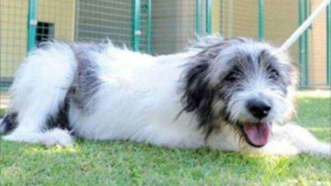 cane abbandonato boffalora