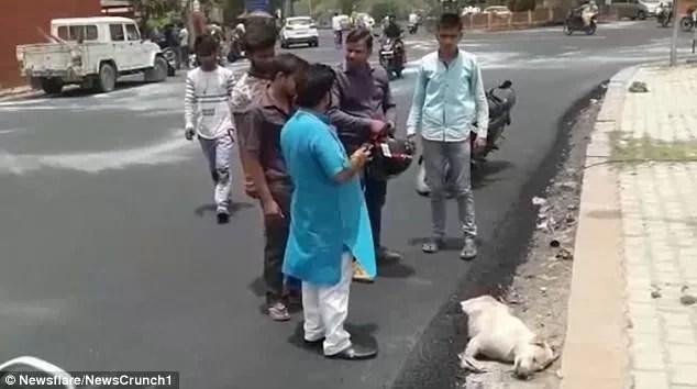 Operai asfaltano cane che dorme.