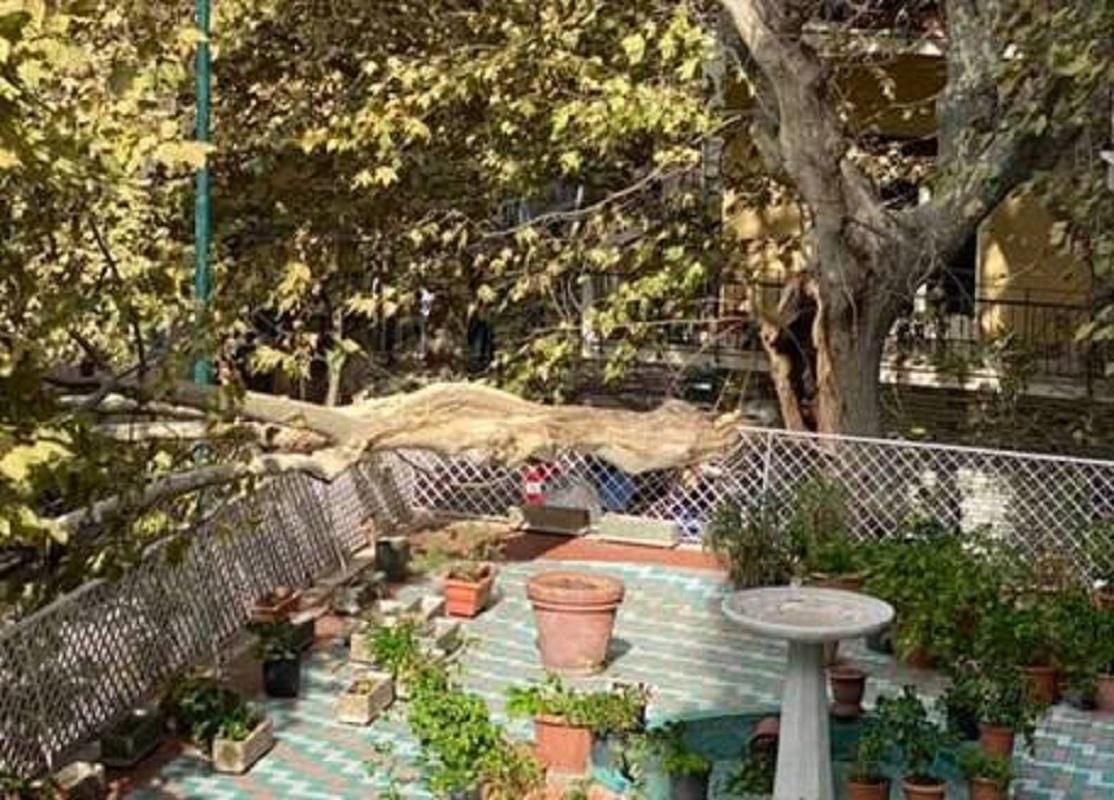 Napoli, grosso ramo si spezza e cade su un terrazzo al Vomero
