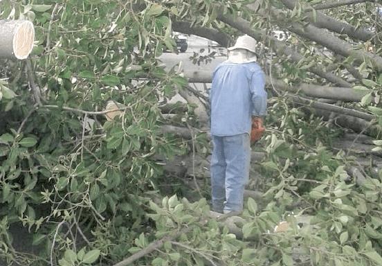 Colonos denuncian tala masiva en ZMG  | La Crónica de Hoy - Jalisco