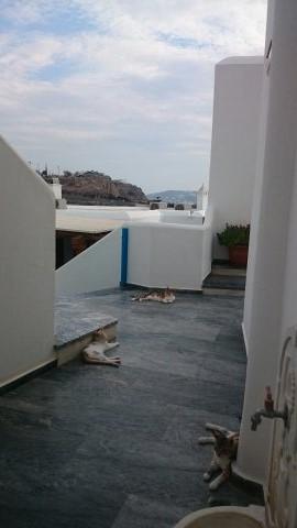 Qué ver en Mykonos.El hotel de los gatos.