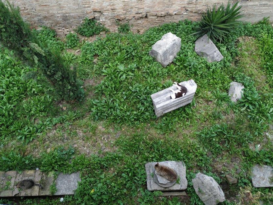 Area Sacra. Roma. Gatos de Area Sacra.