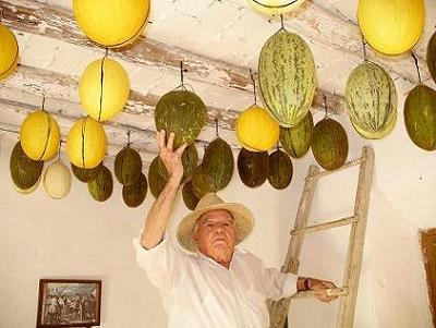 20070109095057-melones-invierno.-ijpg.jpg