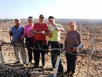 20070117163335-poda-vinedo-mujeres.jpg