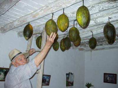 20080911081915-melones-de-invierno.jpg