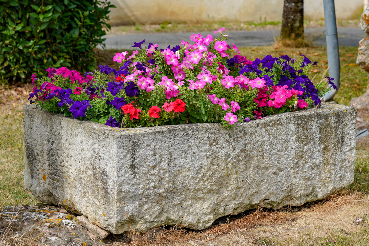 Petunias always make me think of Dinghies