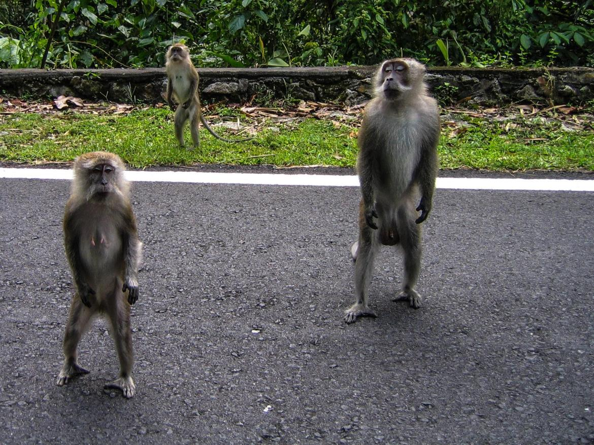 Kuala Lumpur: Tropical heat. Tons of monkeys. What more could you want?