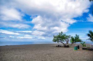 A remote tree