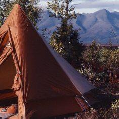 explore Alaska, wild nature, bear, cariboo