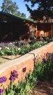 garden, Jordan historic home, Sedona, March 11, 2009