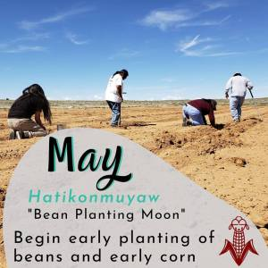 Several Hopi men are planting in the fields following ancestral dry farming techniques.