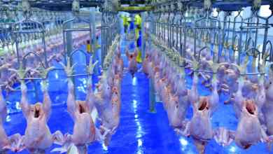 Photo of Cross River ramps up chicken processing at 24000 birds per day factory as ultramodern poultry begins evacuation of birds