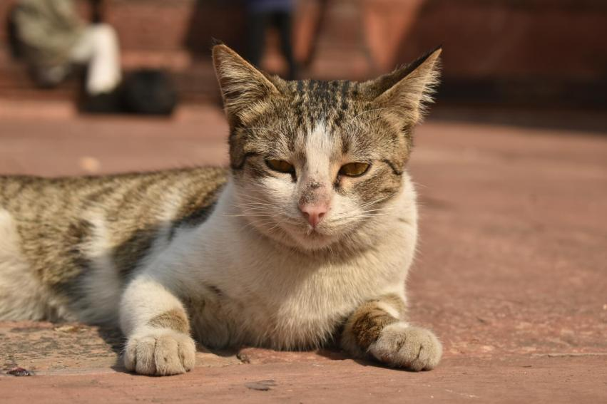 You can see the numbers of cats in Jama Masjid of Delhi