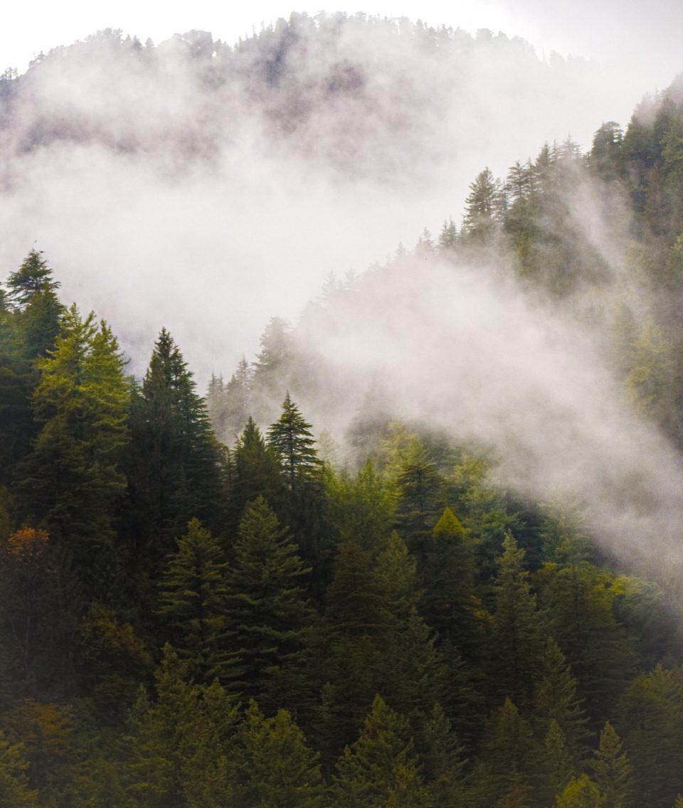 Beautiful Foggy Barot Valley just before the heavy rain
