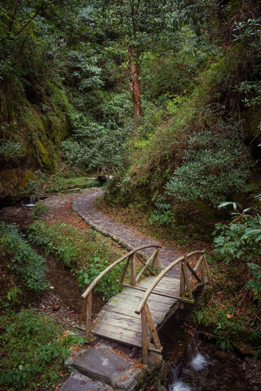 Wooden Bridges in the dense surroundings in Jibhi Himachal