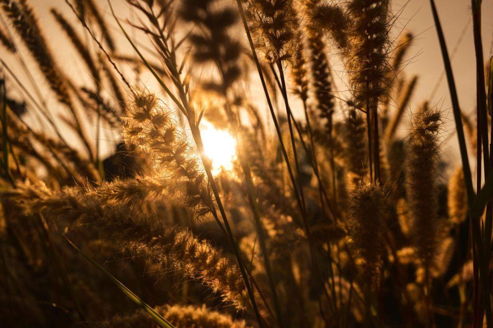 Field in Goa - Sunlight Perspective
