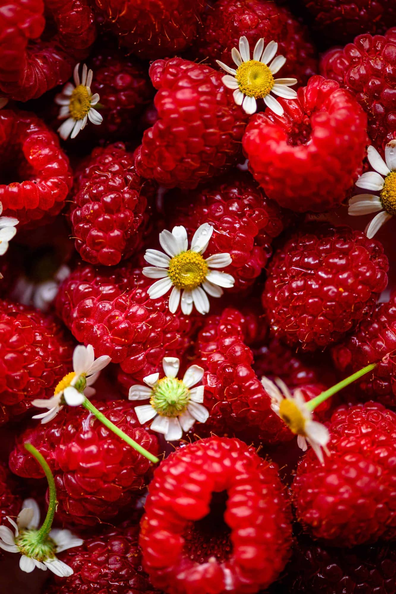 Overhead close up view of fresh raspberries and chamomile flowers