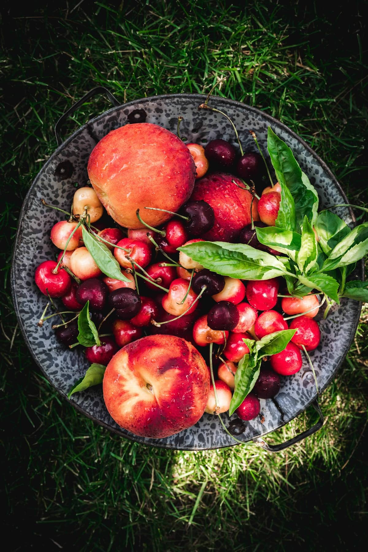 Overhead view of peaches, cherries and basil in bowl on grass