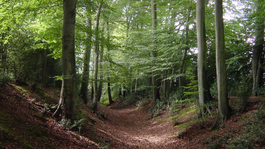 ancient woodland protection a