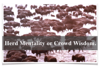 Herd Mentality or Crowd Wisdom