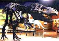 Dinosaur Fossil Old Antiquated
