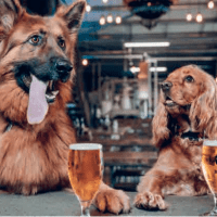 BrewDog USA Files New Reg A+ Offering as it Looks to Crowdfund Additional Growth Capital