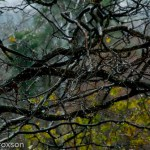 Before the snow - raindrops in the tree