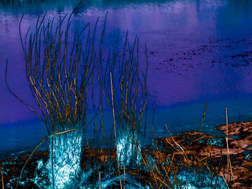 Tamar Reeds