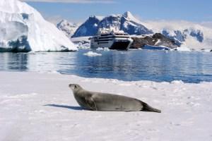 Mit Ponant und National Geographic Expeditions in die Antarktis
