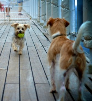 QM2 doggie friends - 1 meg - photo credit Simone Seckington