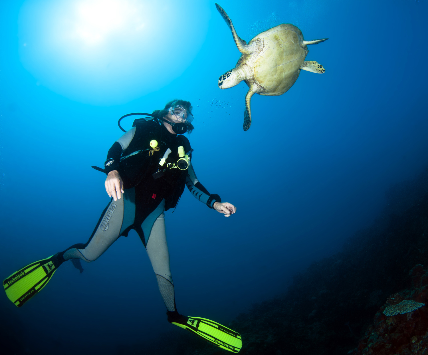 C6 Ribbon Reefs-Sylvie and Green Turtle -