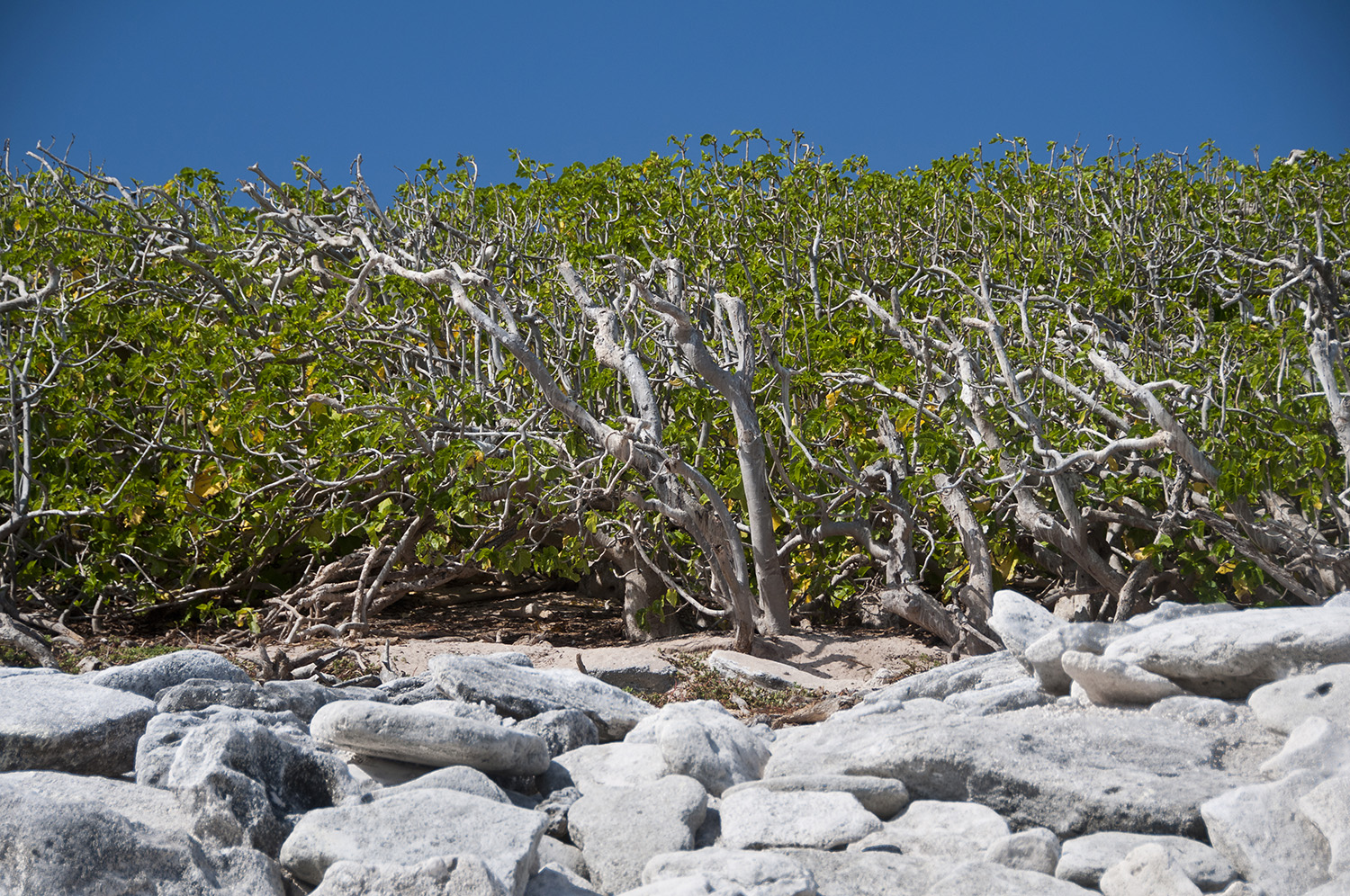 North East Herald Cay has the thickest vegetation of any of the Coral Sea Islets.