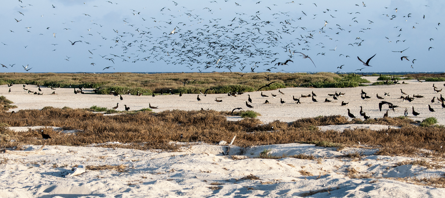 Marine birds on vegetated Sandbank Eight.