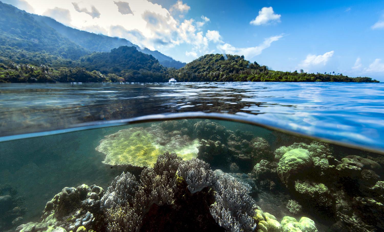 robin jeffries in PNG
