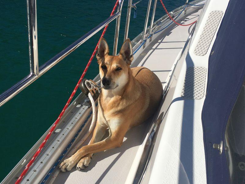 Foxy enjoying the sun