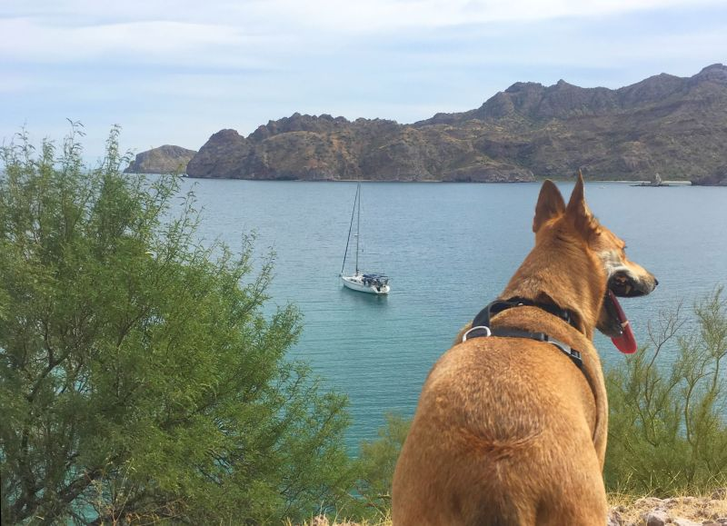 Foxy overseeing Volare at anchor in Aqua Verde