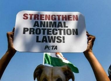 PETA proteste devant l'exposition canine de Westminster