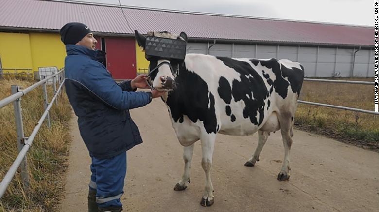 Lunettes de vache VR