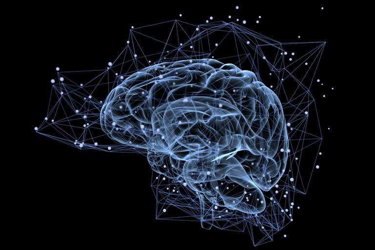 Les médecins combattent le cancer du cerveau en développant des mini-cerveaux pour tester les traitements