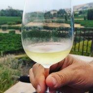 Chardonnay Gloria Ferrer Carneros Sonoma County