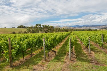 The Vineyard Landscape Australia