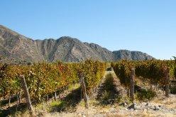 Vineyard Cafayate-Argentina