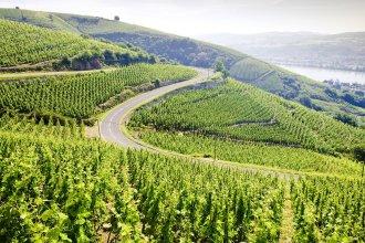 grand cru vineyard Côte Rotie Rhône Alpes France