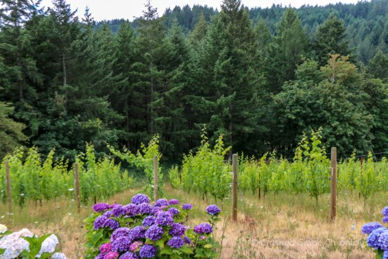 Gardens and Vineyard at Beckham Estate Vineyard in Willamette Valley's Chehalem Mountain AVA