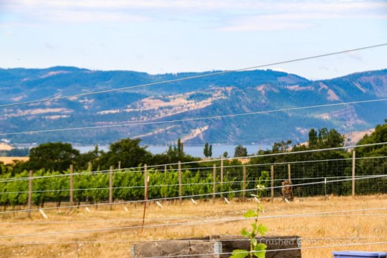 Views of the Gorge make this Washington Wine delicious