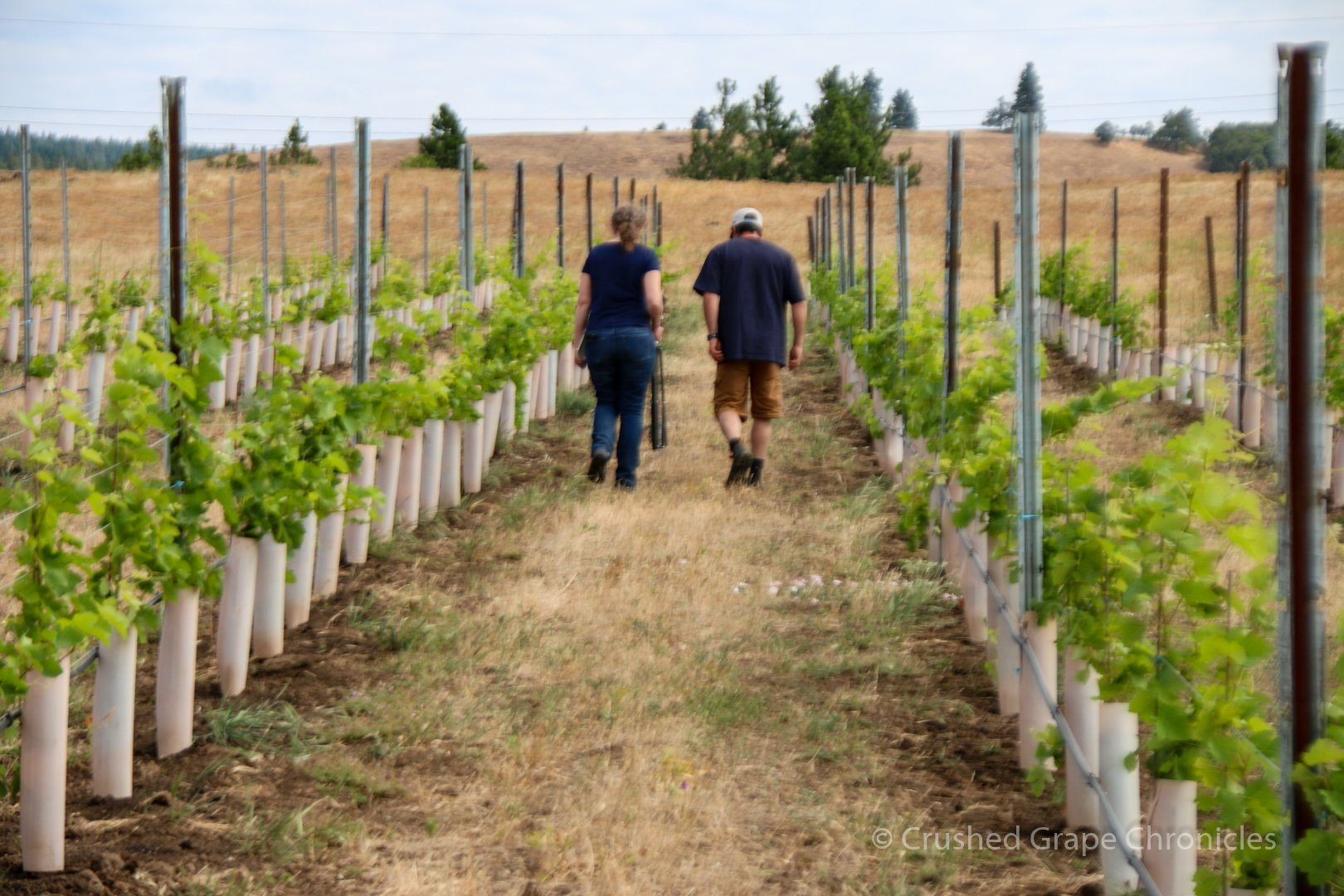 Walking the Steep Ranch Vineyard with Syncline's James Mantone