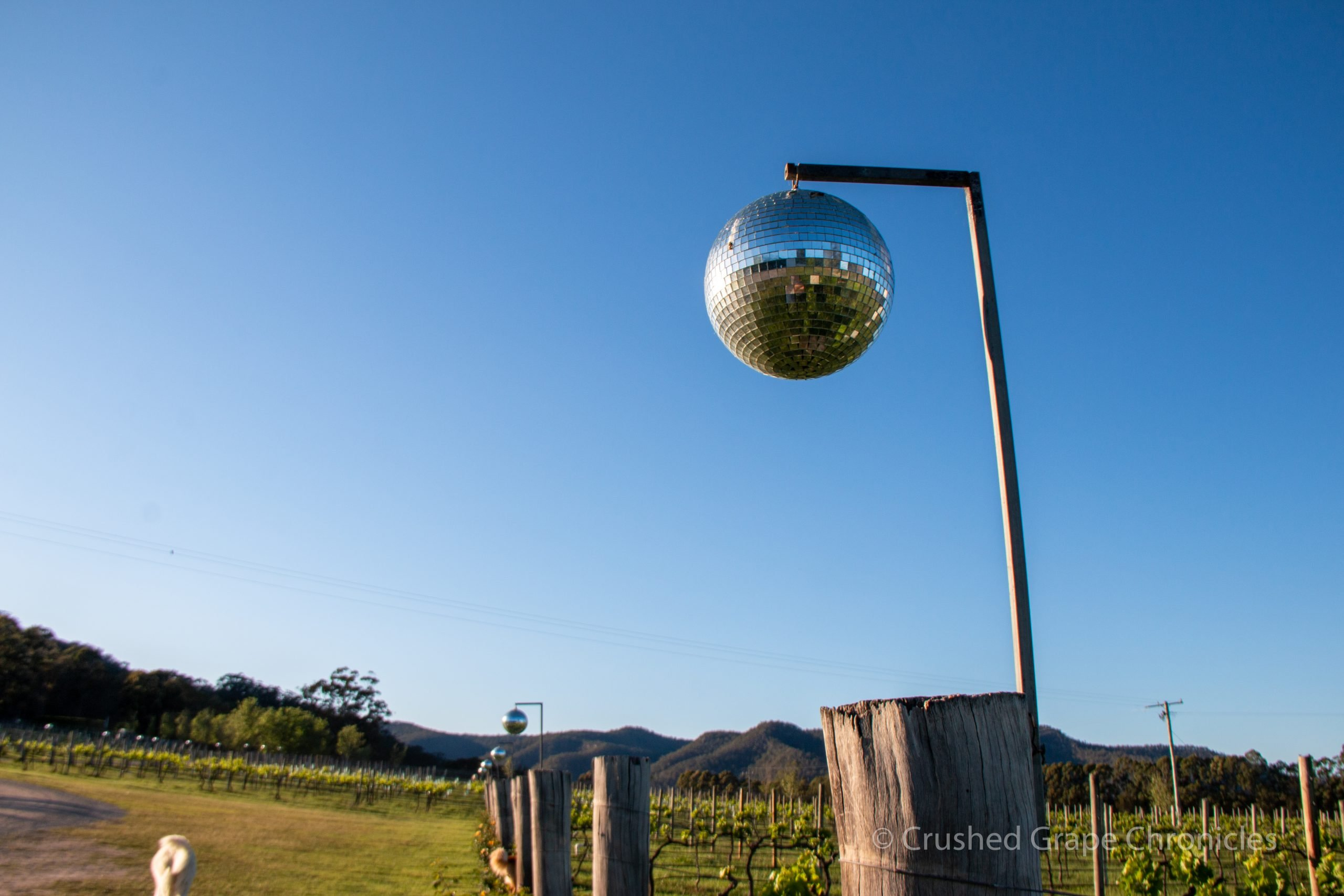 Krinklewood in Hunter Valley Australia with Mirror ball for bird deterent