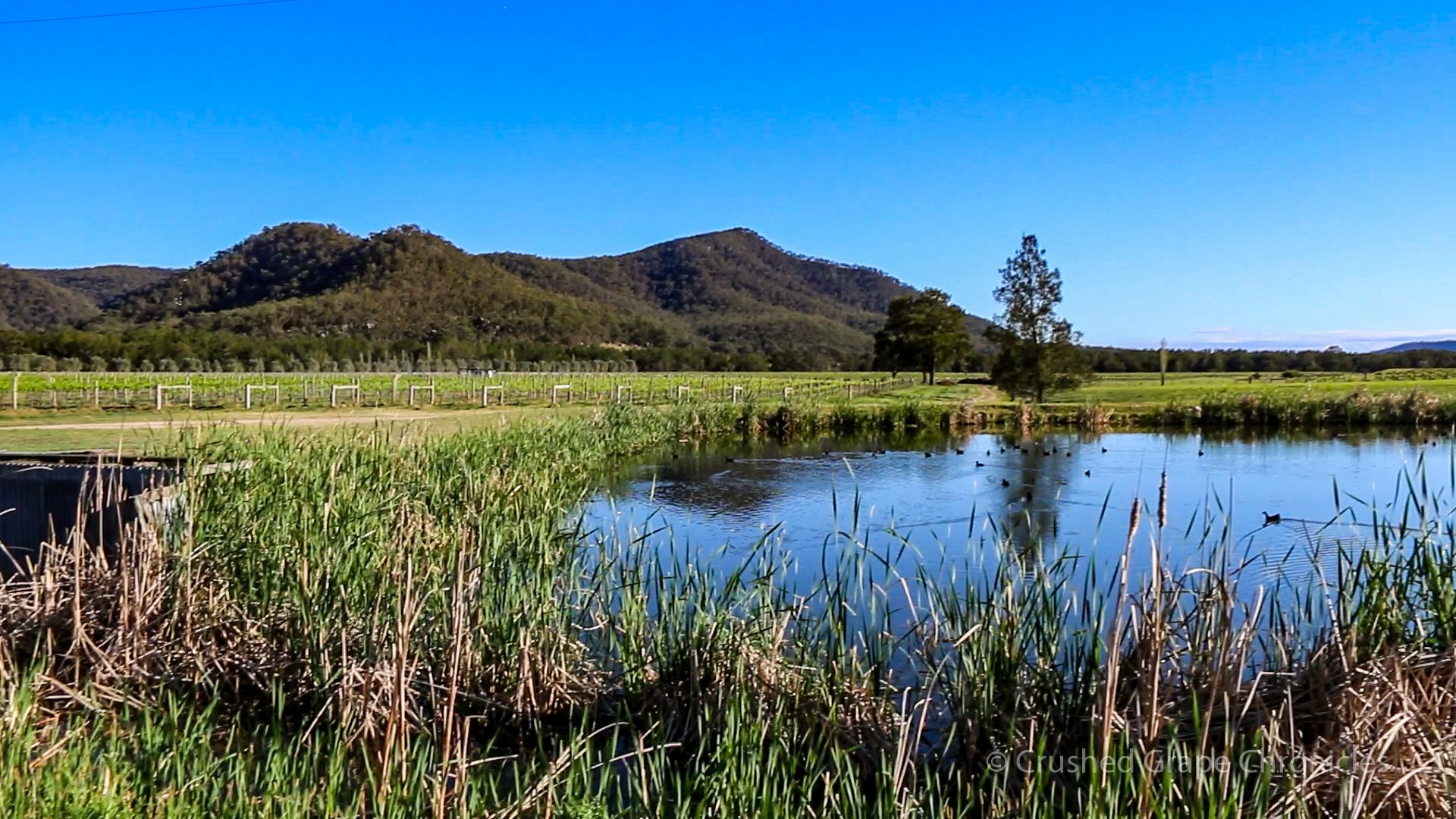 The pond for irrigation at Krinklewood NSW Australia
