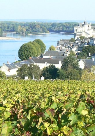 Photo of Saumur Champigny - courtesty Vins du Val du Loire