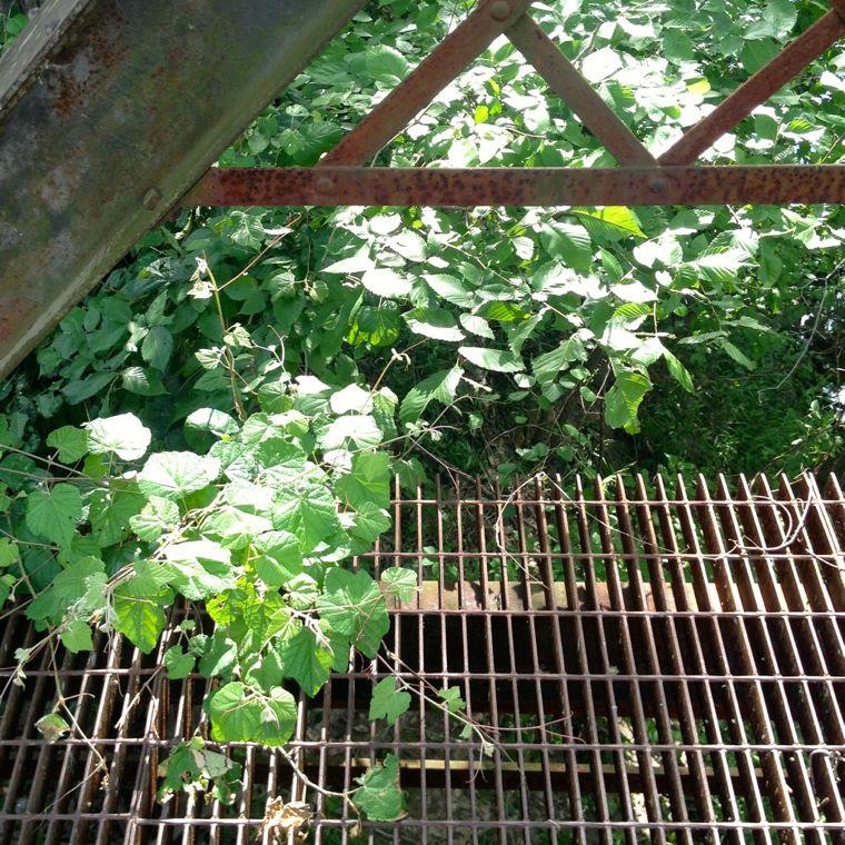 Willow Bridge Vine